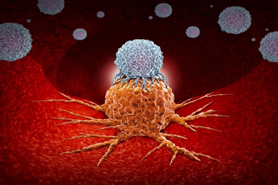 Immunsystem, Aufgaben, Funktion, Organe